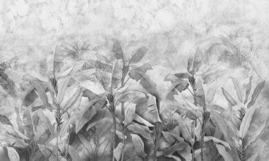 Tapeta na wymiar bananowiec Musa, czarno-biała, odcienie szarości